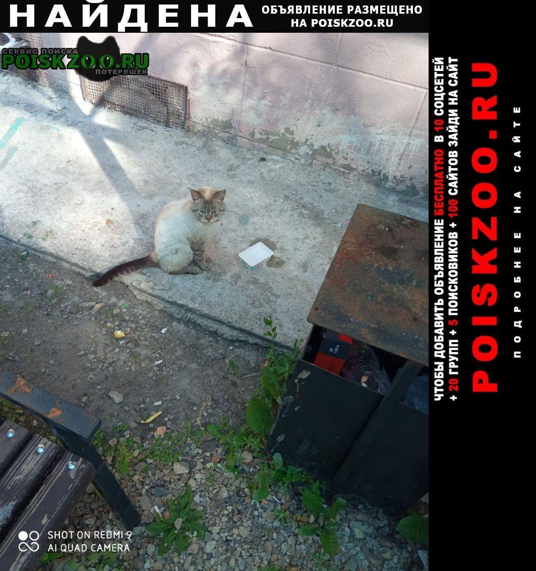 Найдена кошка красный ошейник со стразами Пенза