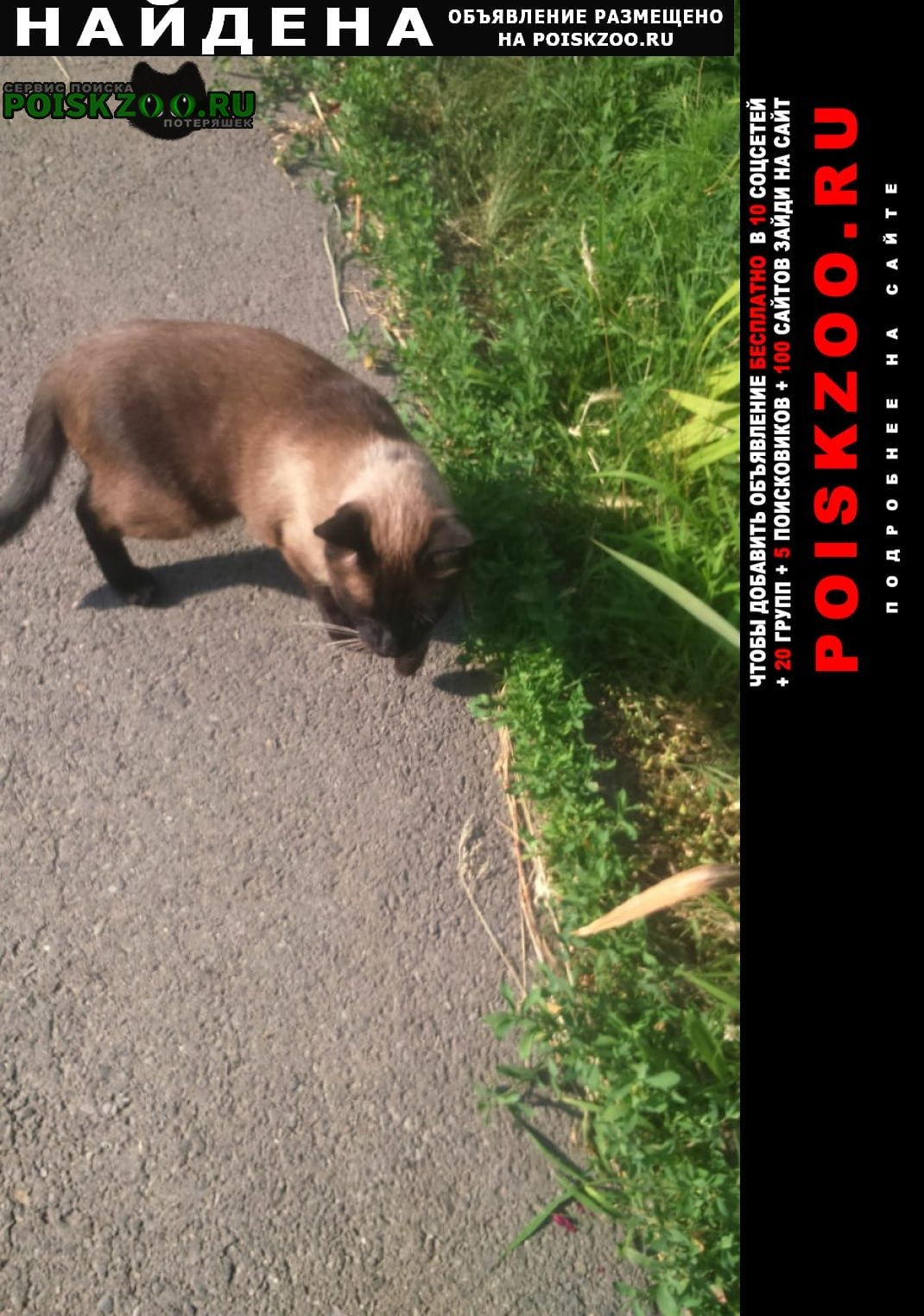 Аксай (Ростовская обл.) Найдена кошка кот