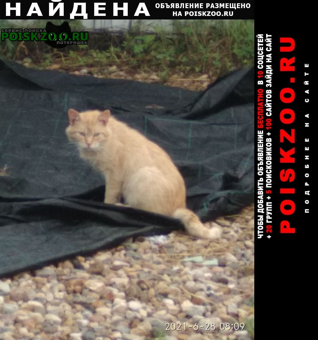 Найден кот в районе село храброво Дмитров