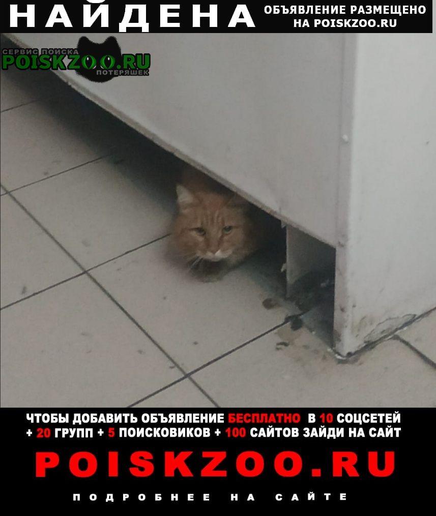 Найдена кошка рыжий кот / Москва