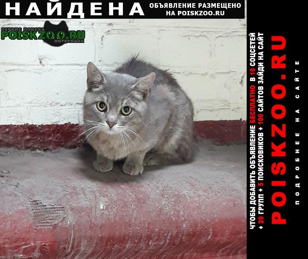 Найдена кошка м. кожуховская Москва
