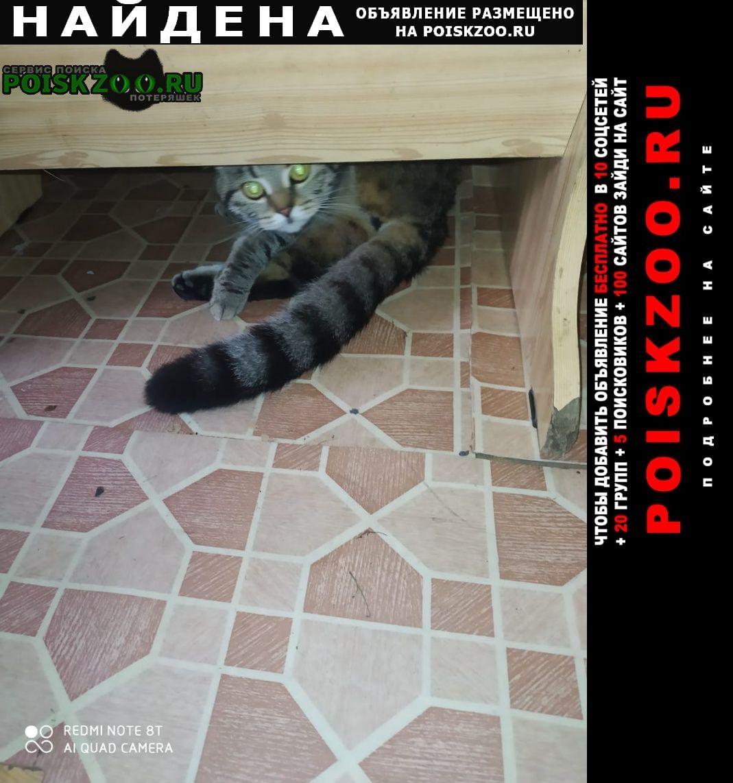 Найдена кошка 91 квартал грайворонова Москва