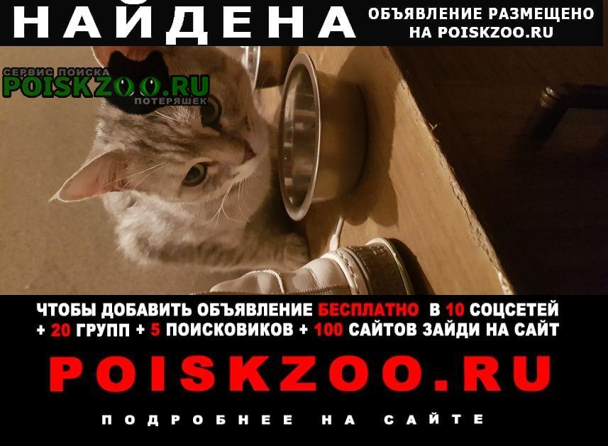 Найден кот окрас вискас Волгоград