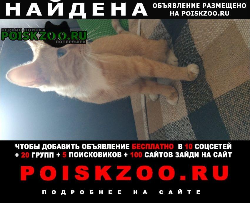Москва Найден кот ищем хозяев. либо тех, кто хочет нём п
