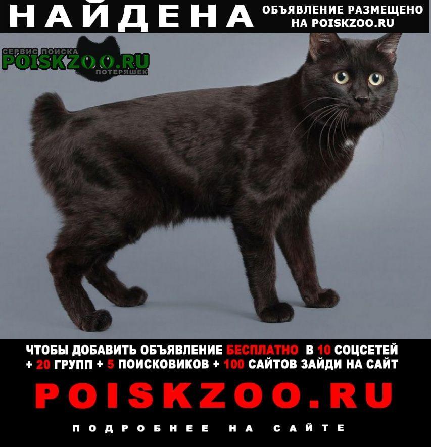 Найден кот. измайлово Москва