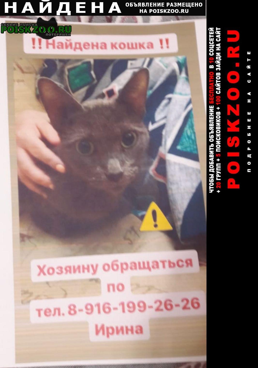 Москва Найдена кошка героев панфиловцев 23 к.1