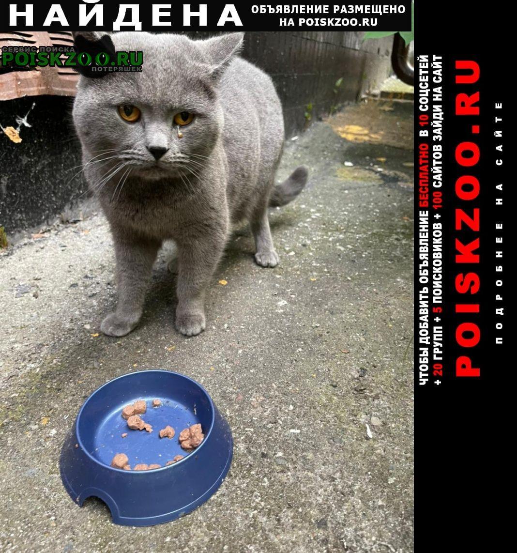 Москва Найден кот