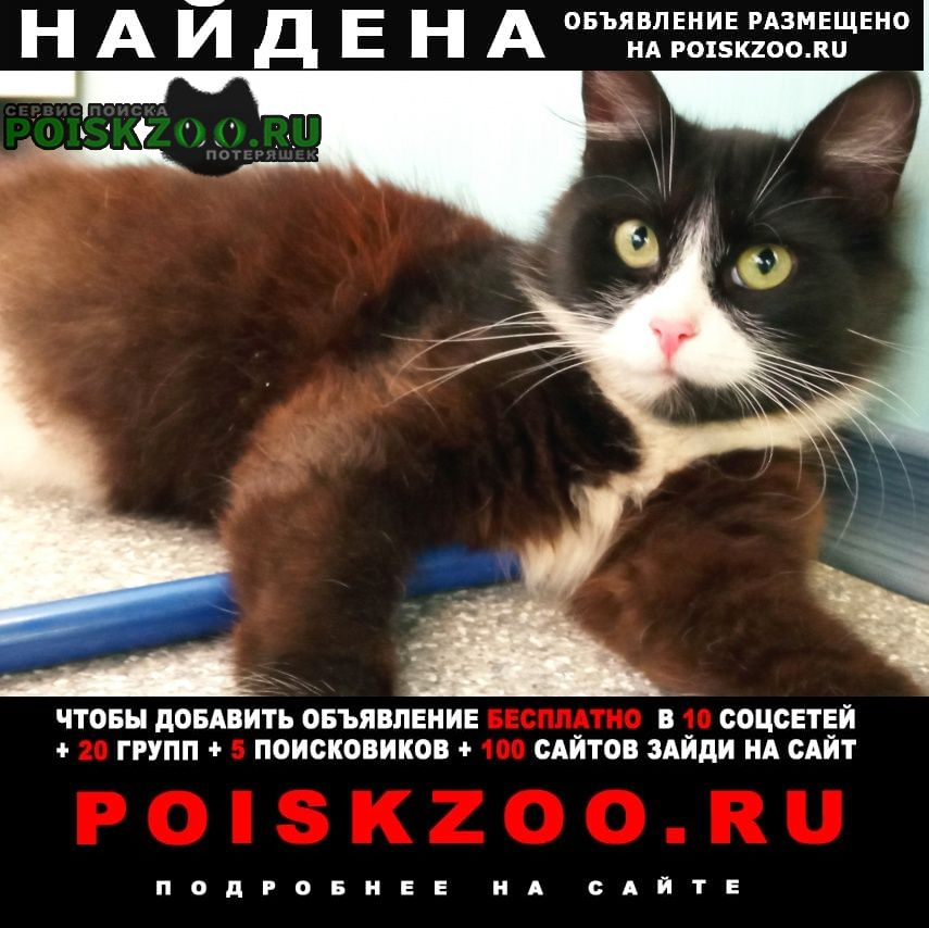 Найдена кошка Великий Новгород (Новгород)