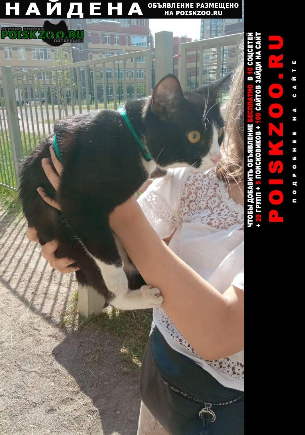 Санкт-Петербург Найден кот черно белый молодой с зеленой