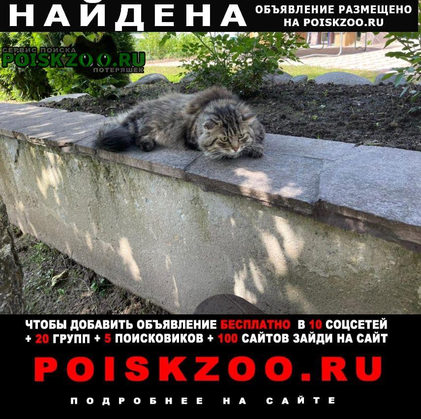 Найдена кошка Пушкино