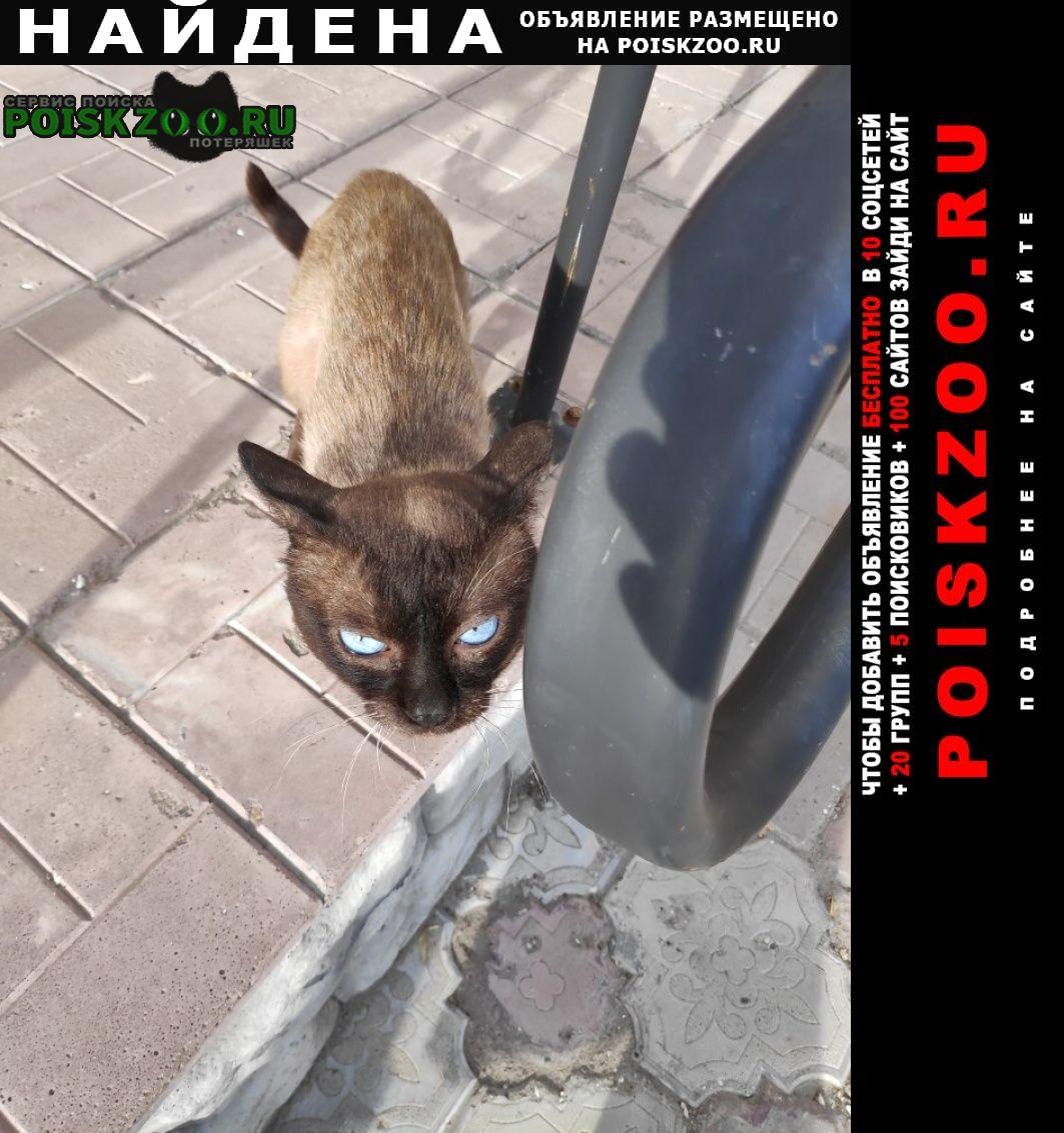 Найден кот сиамский красавец Саратов