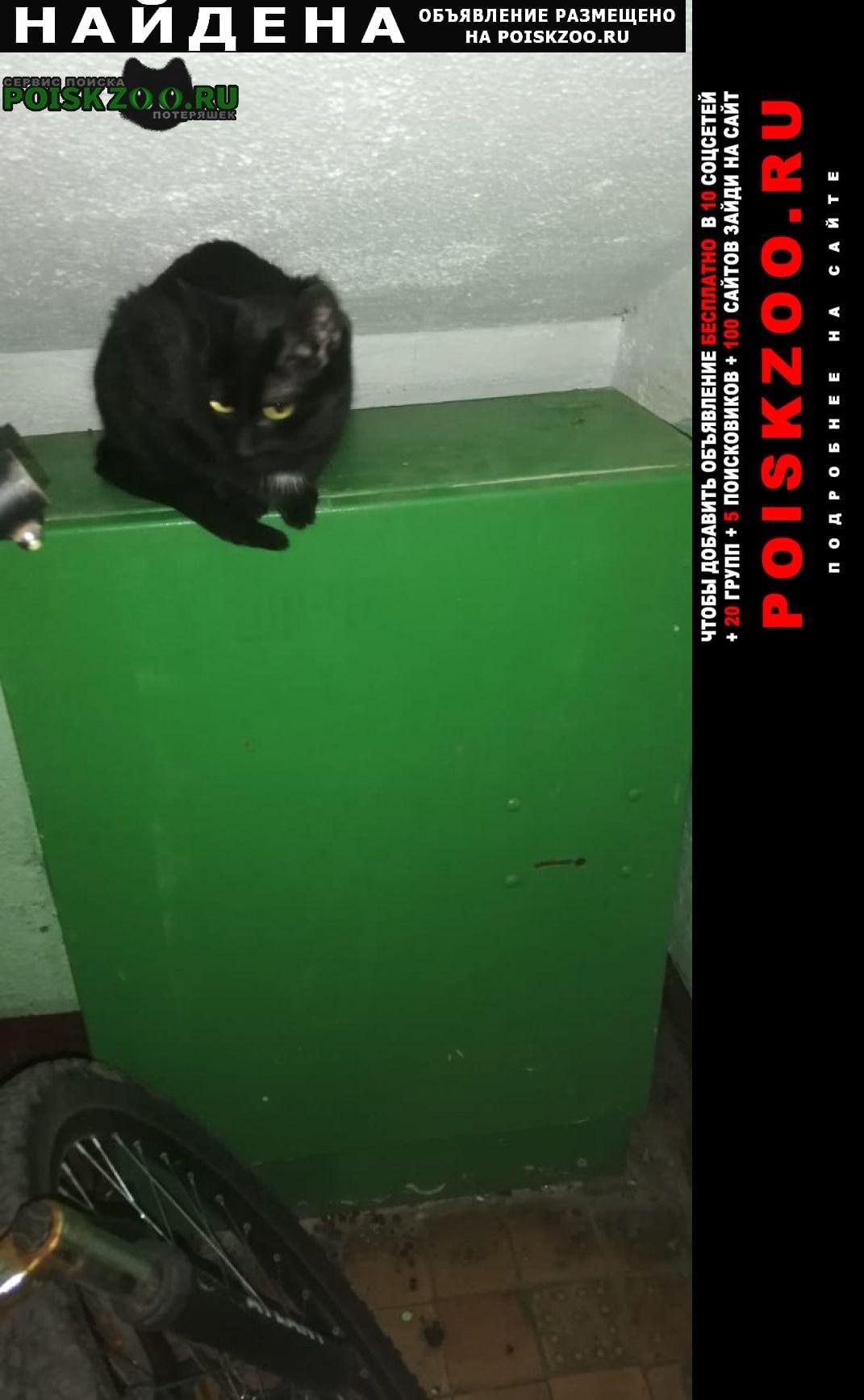 Найдена кошка (а) кот/ Мытищи