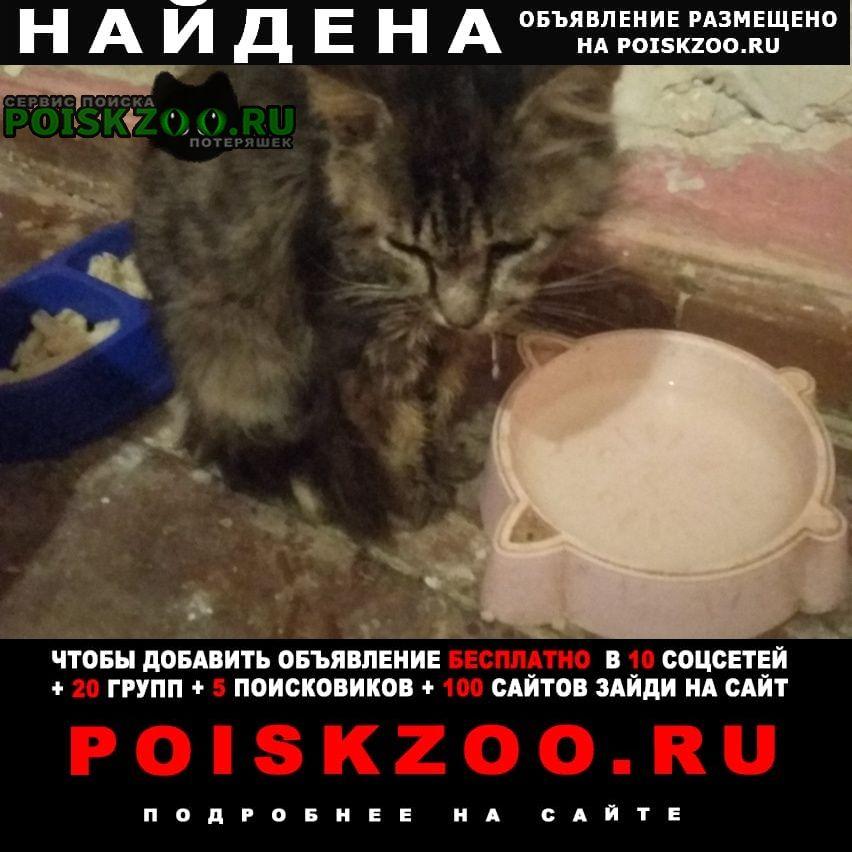 Найден кот полосатый Астрахань