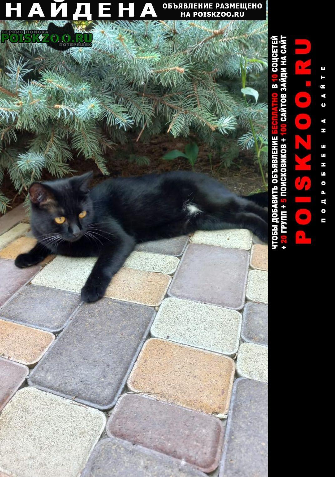 Краснодар Найден кот чёрный в красном ошейнике.
