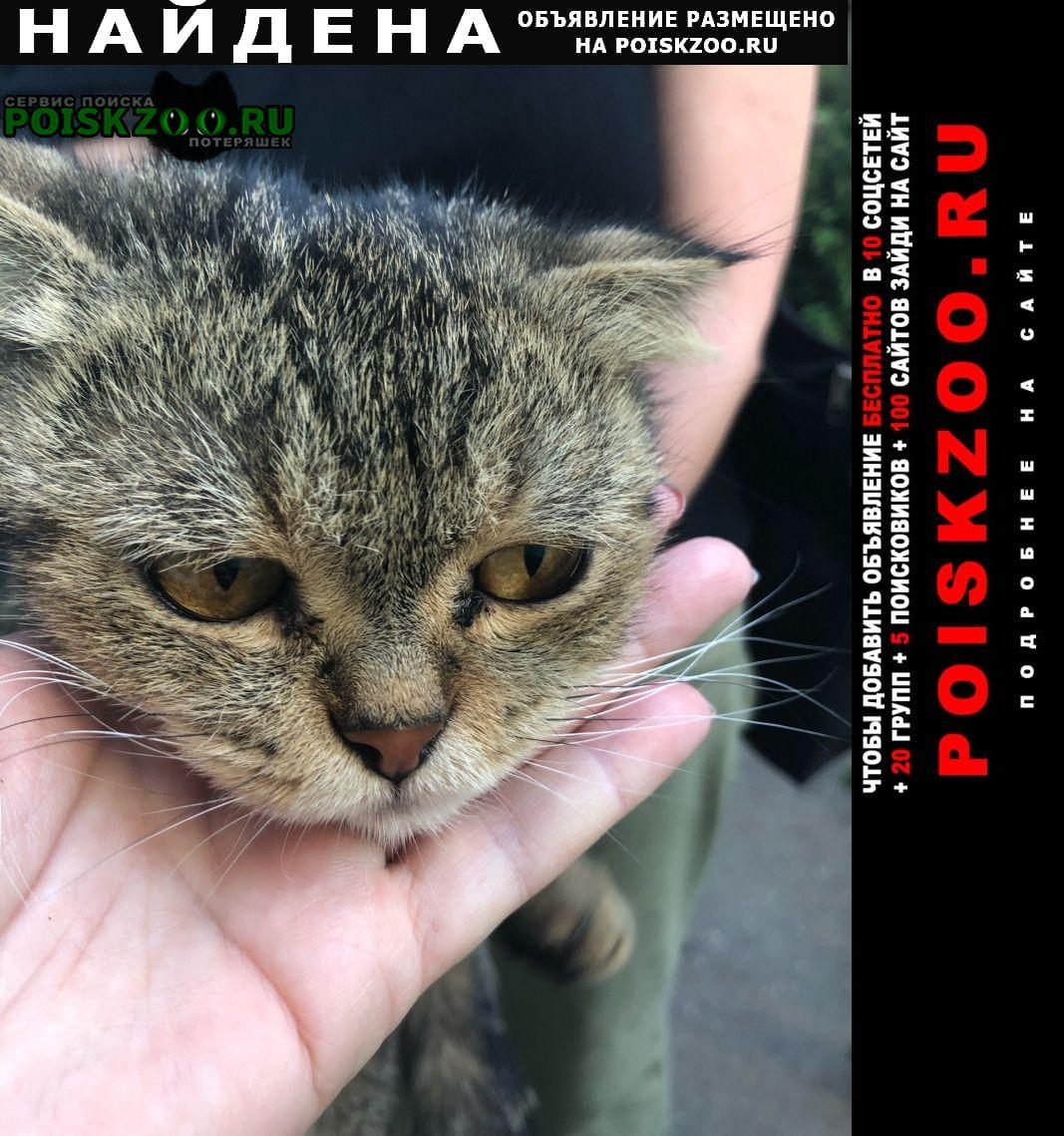 Найдена кошка Железнодорожный (Московск.)
