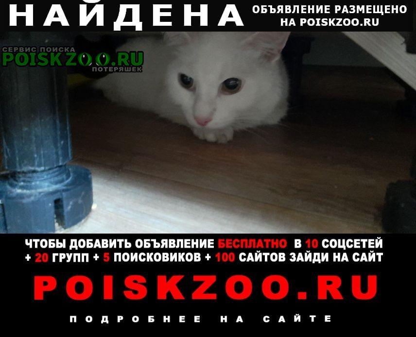 Кемерово Найдена кошка