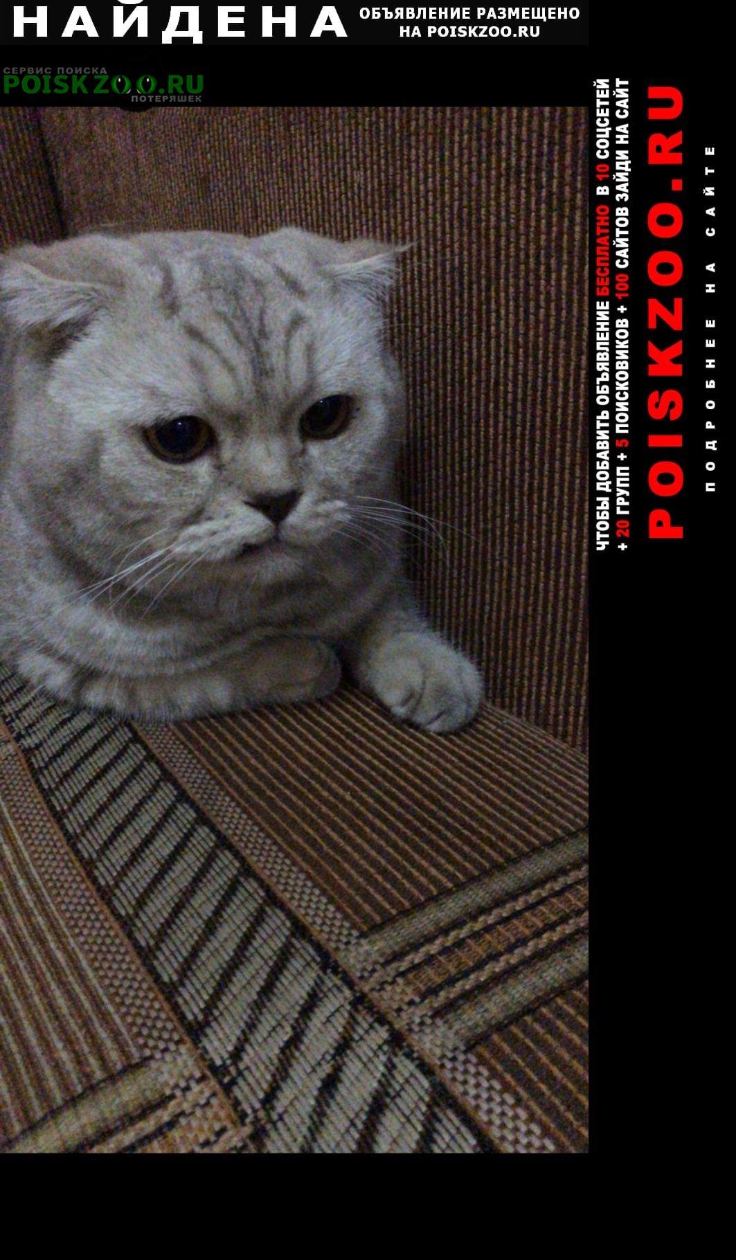 Найден кот вислоухий Москва