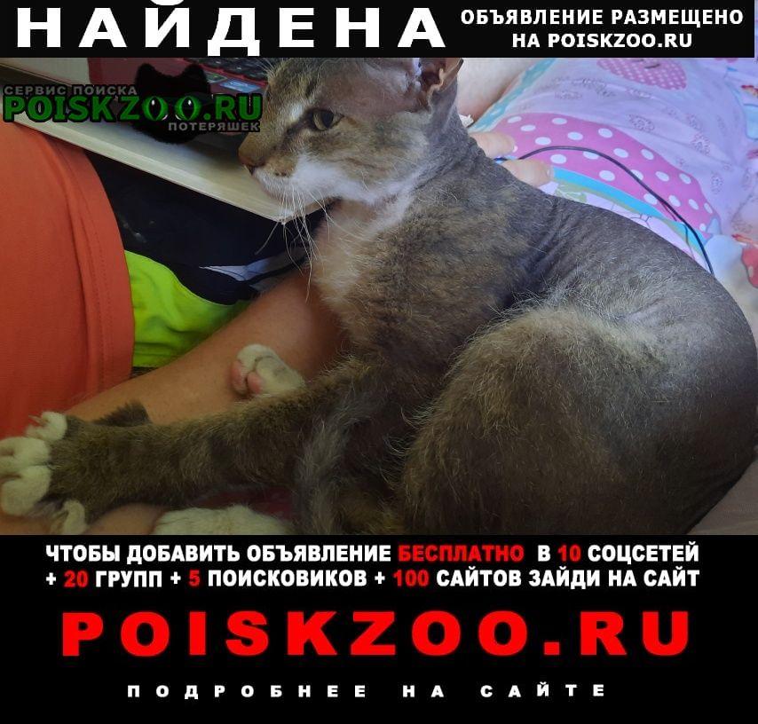 Краснодар Найдена кошка сфинкс