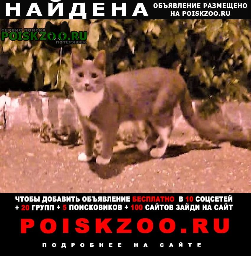 Уфа Найдена кошка