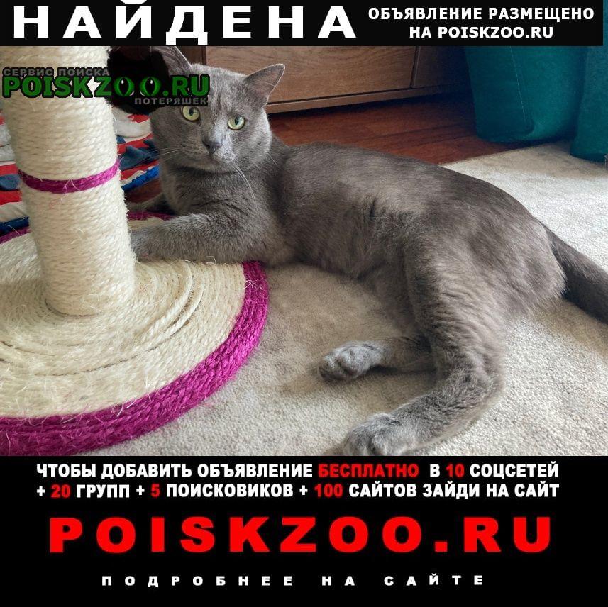 Найден кот серого цв, сао Москва