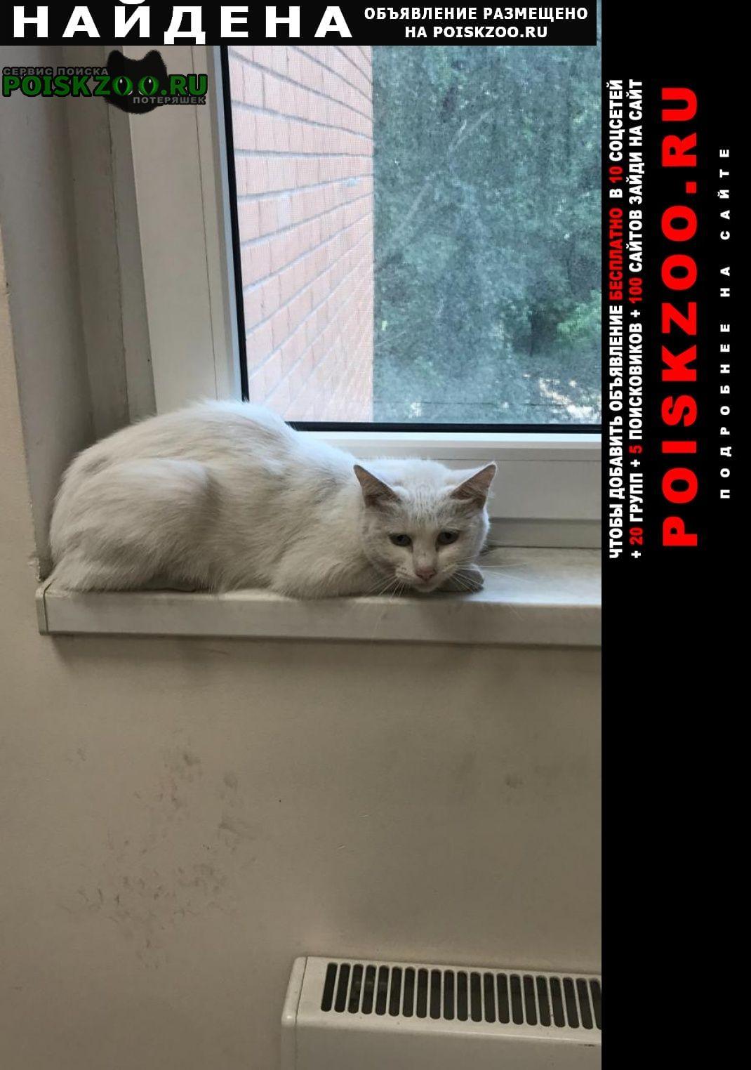 Найдена кошка явно домашняя Москва