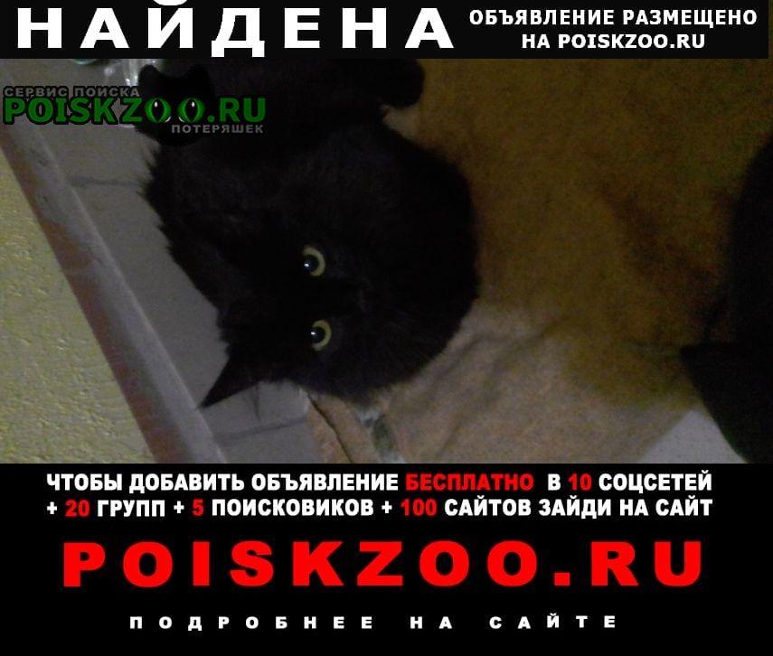 Найдена кошка котенок девочка Санкт-Петербург