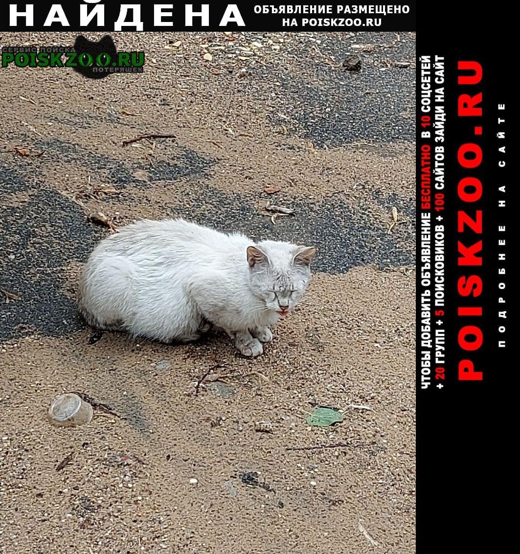 Москва Найдена кошка