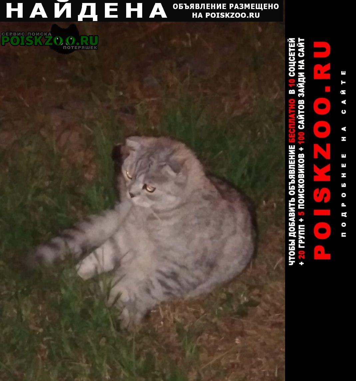 Найдена кошка видели на набережной Иваново