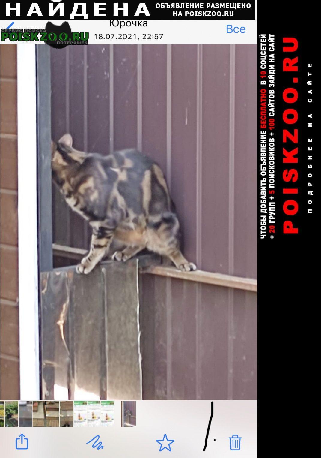 Найдена кошка Всеволожск