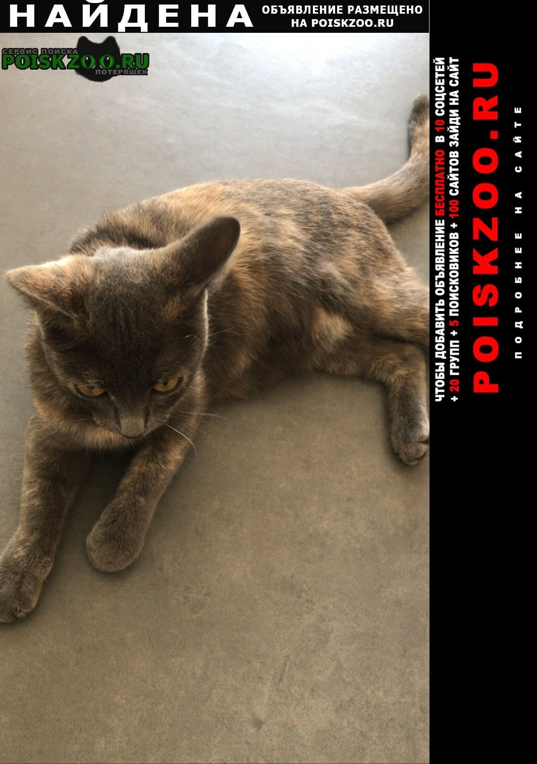 Найдена кошка ищем хозяина Астана Акмолинская обл. (Целиноградская обл.)