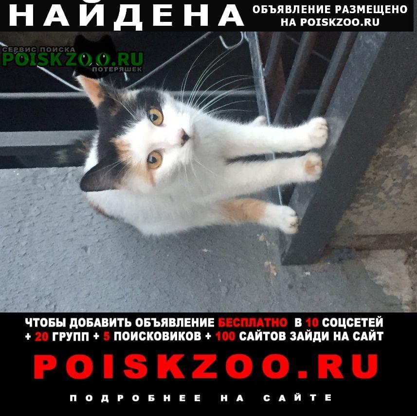 Найдена кошка Витебск