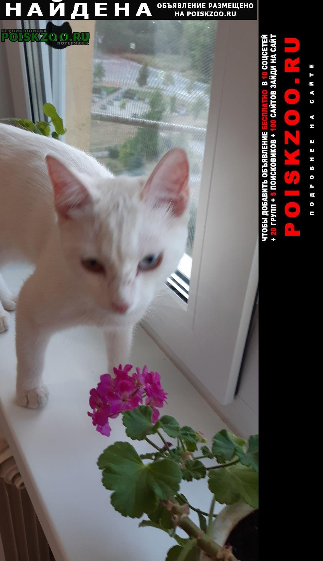 Найдена кошка.г Петродворец