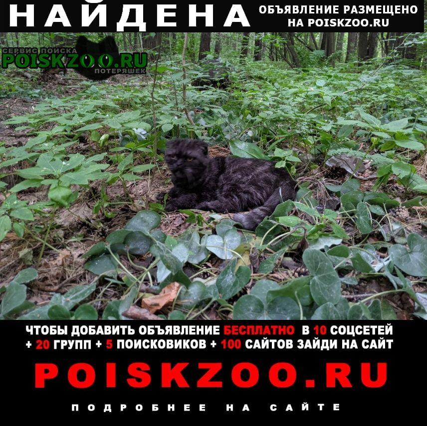 Найдена кошка бутово Москва