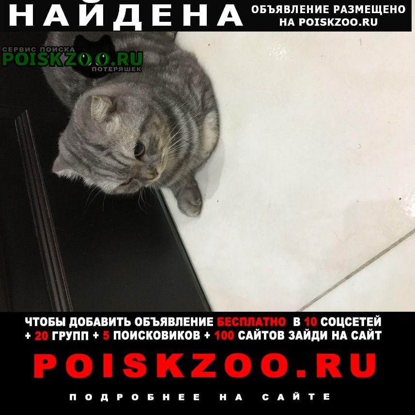 Найдена кошка ( кот ) вислоухая серо- тигровая Подольск
