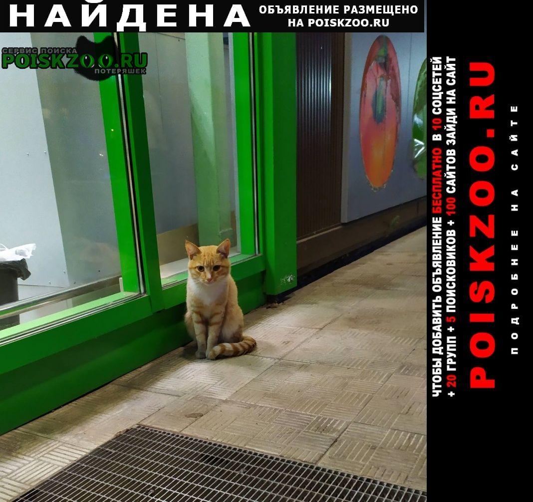 Иваново Найдена кошка чья потеряшка?