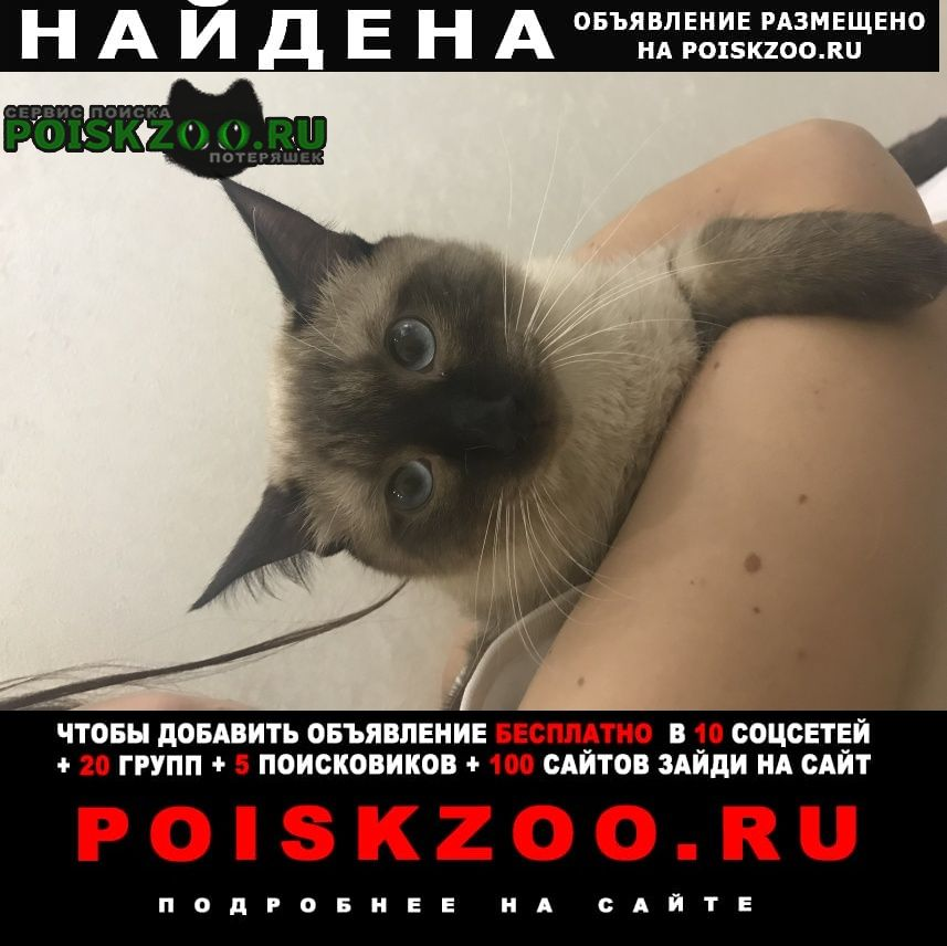 Найдена кошка сиамский кот Троицк