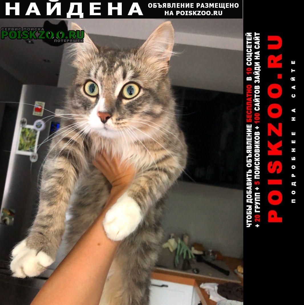 Найден кот Химки