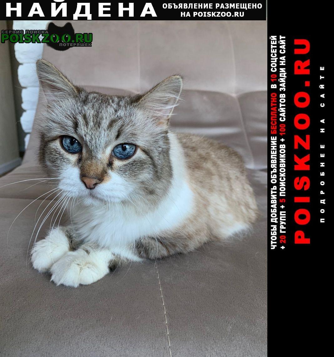 Найден кот Нижний Новгород