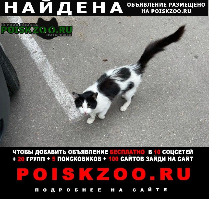Найдена кошка Звенигород