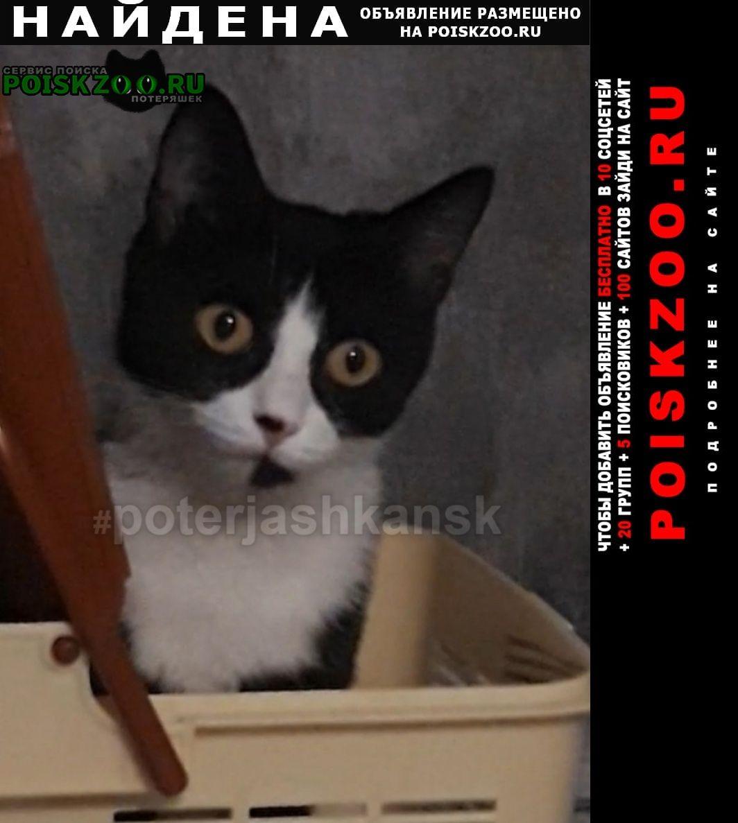 Найдена кошка черно-белая Новосибирск