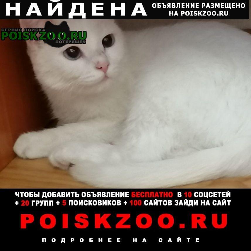 Найдена кошка полностью белая, глухая Бердск