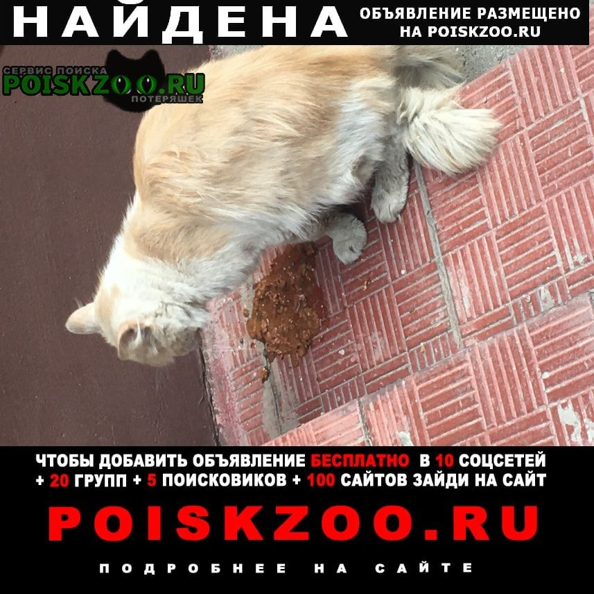 Найдена кошка Щербинка