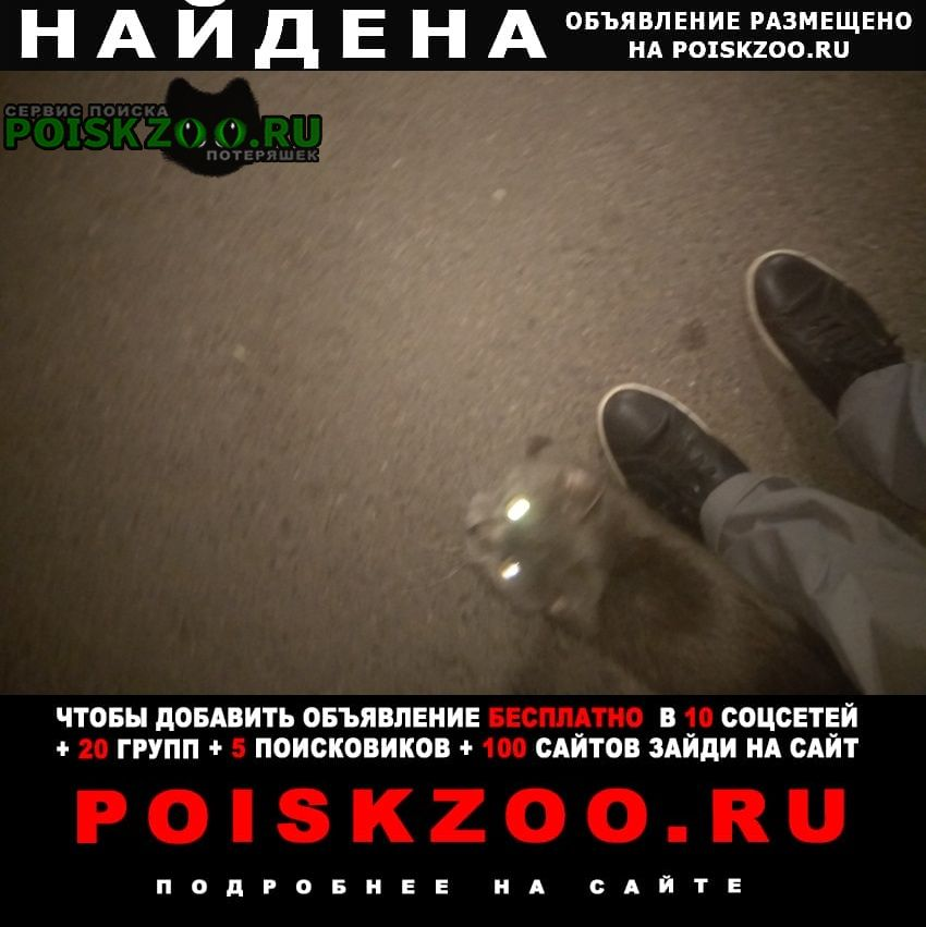 Найдена кошка или кот серый окрас Москва