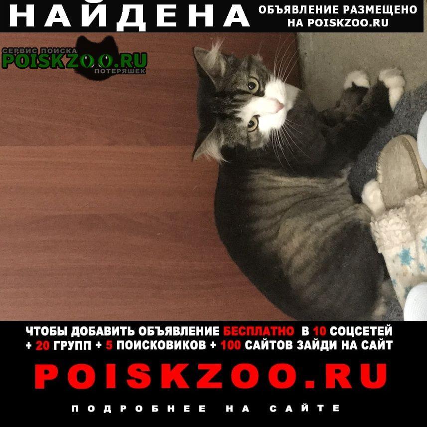 Найден кот подстриженый Санкт-Петербург