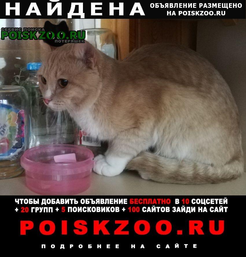 Найден кот Нефтеюганск