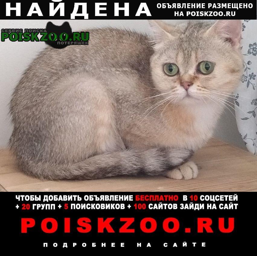 Найдена кошка. спб, калининский Санкт-Петербург