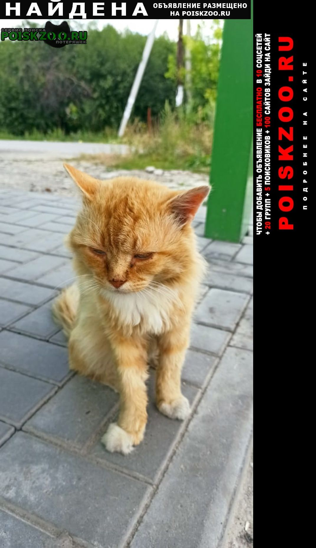 Найдена кошка кот. был очень пушистый. Старожилово