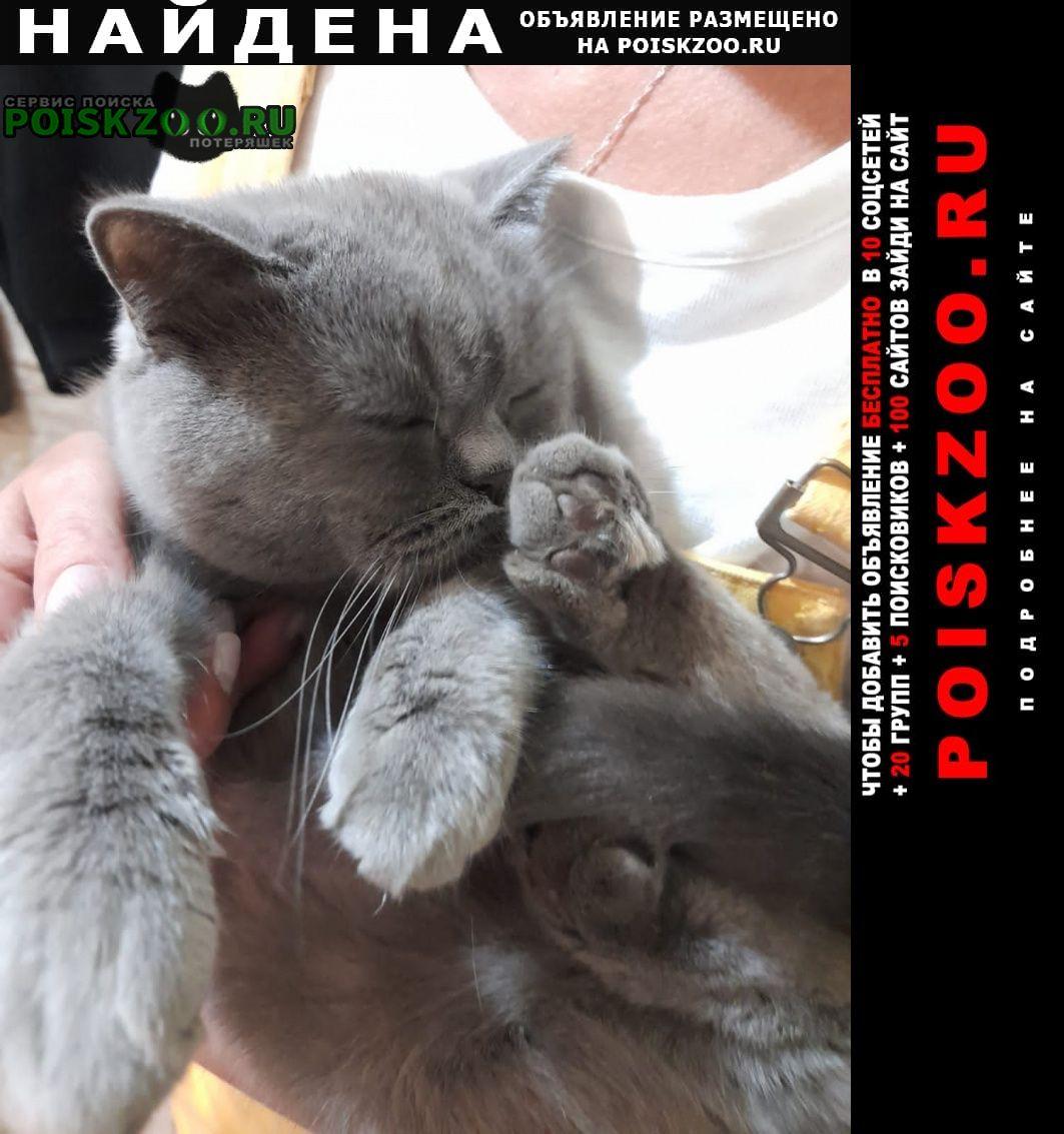 Найдена кошка в парке кузьминки Москва