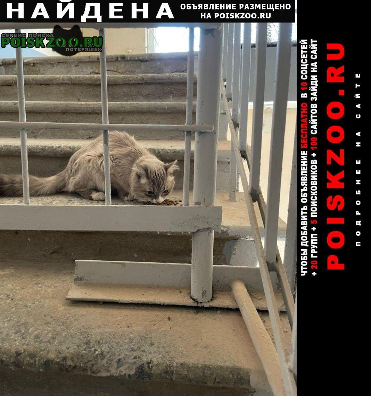 Найдена кошка кот / Москва