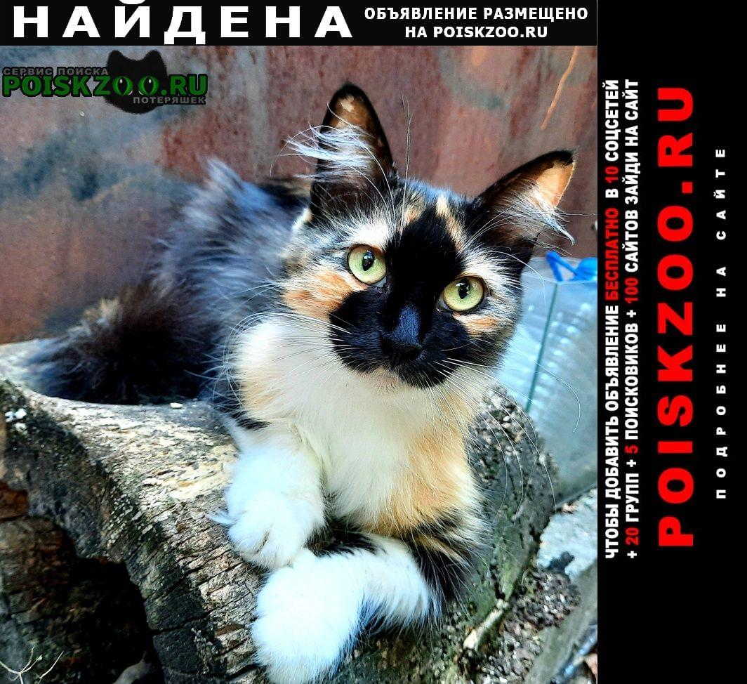 Найдена кошка трехцветная Ростов-на-Дону
